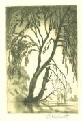 [Strom nad hladinou] (odkaz v elektronickém katalogu)